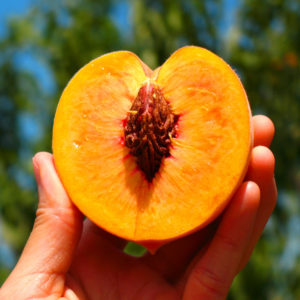 sweet peach seeds sale