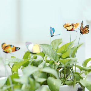 Butterfly Stakes Garden