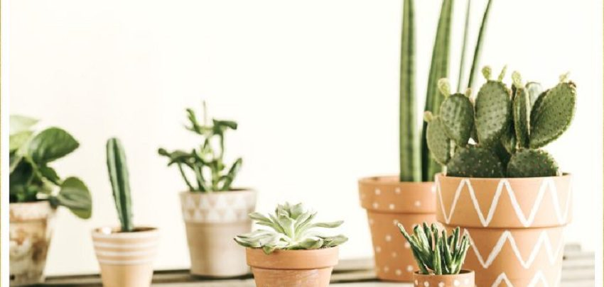 Everything about cactus plants