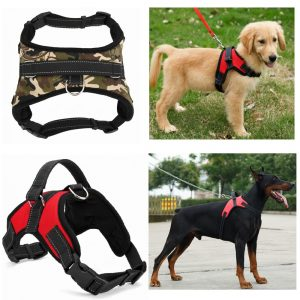 buy small dog harness