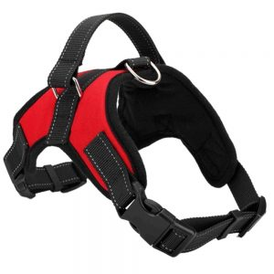 best walking harness for dogs