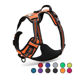 cheap dog harness buy