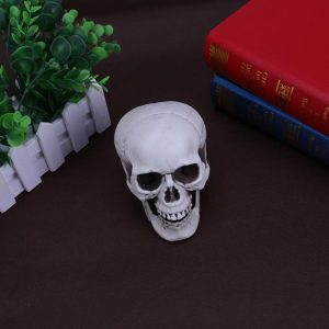 artificial skull buy online