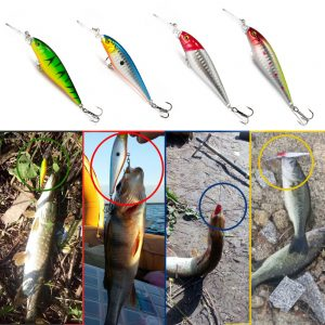 fishing bait buy online